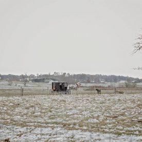Buggy during Winter in Berlin Ohio